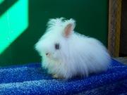 крольчата декоративные