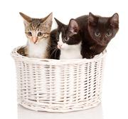 Котята от умнейшей кошки