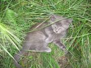отдам котят в добрые руки, очень милые и симпатичные создания